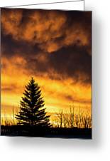 Silhouetted Evergreen Tree Greeting Card