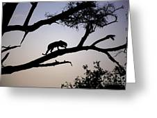 Silhouetted Leopard Greeting Card