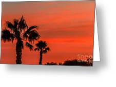 Silhouetted Palm Trees Greeting Card