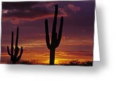 Silhouetted Saguaro Cactus Sunset  Arizona State Usa Greeting Card