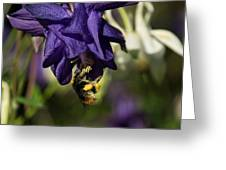 Silky Blue Columbine And A Busy Bee Greeting Card