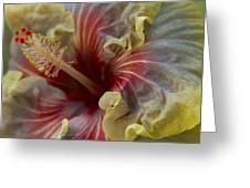 Silky Frillls Greeting Card