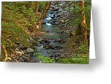 Silky Stream In Rain Forest Landscape Art Prints Greeting Card