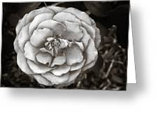 Silky Rose Greeting Card