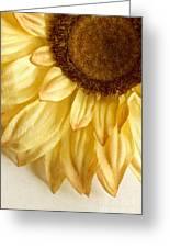 Silky Sun Greeting Card