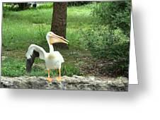 Silly Bird Greeting Card