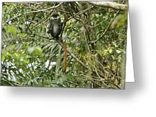 Silly Red-tailed Monkey Greeting Card