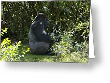 Silver Back Gorilla Greeting Card