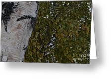 Silver Birch Greeting Card