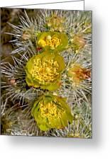 Silver Cholla Cactus Greeting Card