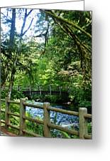 Silver Falls Stream Greeting Card