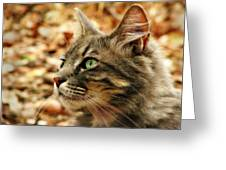 Silver Grey Tabby Cat Greeting Card