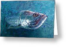 Silver King Tarpon Greeting Card