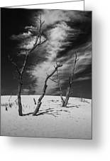 Silver Lake Dune With Dead Trees And Cirrus Clouds In Black And White Greeting Card