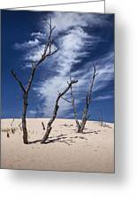 Silver Lake Dune With Dead Trees And Cirrus Clouds Greeting Card