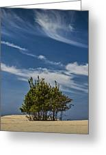 Silver Lake Dune With Tree Grove And Cirrus Clouds Greeting Card