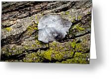 Silver Leaf Greeting Card