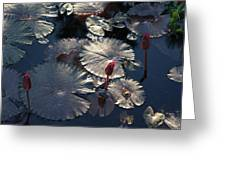 Silver Lilypads Greeting Card