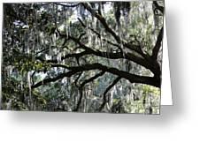 Silver Savannah Tree Greeting Card
