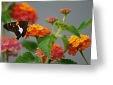 Silver-spotted Skipper Butterfly On Lantana Blossoms Greeting Card