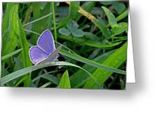 Silver Studded Blue Butterfly Greeting Card