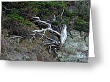 Silver Tree Greeting Card
