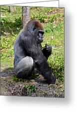 Silverback Gorilla Greeting Card