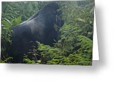 Silverback Side Profile Greeting Card