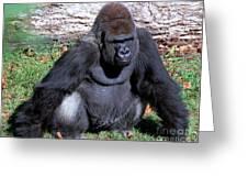 Silverback Western Lowland Gorilla Greeting Card