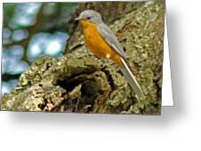 Silverbird Greeting Card