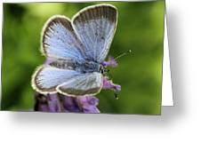 Silvery Blue Butterfly Greeting Card