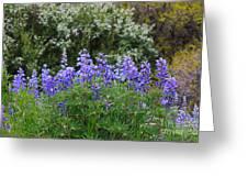 Silvery Lupine Black Canyon Colorado Greeting Card