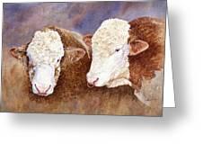 Simmental Bulls Greeting Card