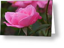 Simplicity Floribunda Rose Greeting Card