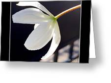 Simply Alone Flower Greeting Card