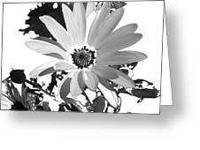 Simply Black And White Greeting Card