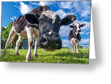 Simply Cows Greeting Card