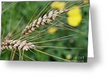 Simply Dried Grass Greeting Card