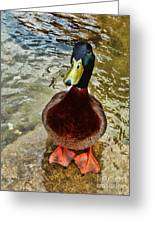 Simply Ducky Greeting Card