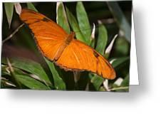 Simply Orange Greeting Card