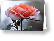 Simply Rose  Greeting Card