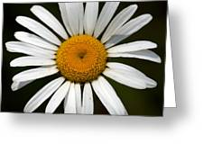 Simply White Greeting Card