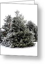 Simply Winter Greeting Card