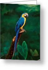 Singapore Macaw At Jurong Bird Park  Greeting Card