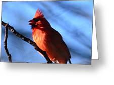 Singing Cardinal Greeting Card