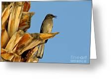 Singing Mockingbird Greeting Card