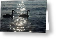 Singing Trumpeter Swans Duet  Greeting Card