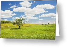 Single Apple Tree In Maine Blueberry Field Greeting Card