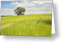 Single Apple Tree In Maine Hay Field Greeting Card