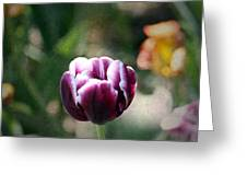 Single Bloom Greeting Card